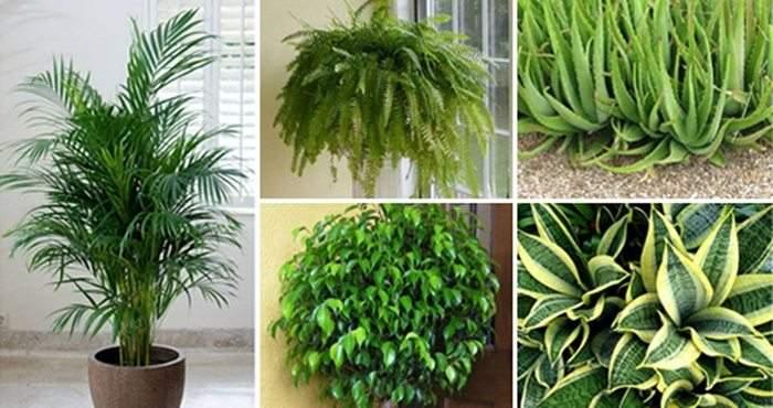 sonno perfetto: le 5 piante da mettere in camera da letto. myrest ...