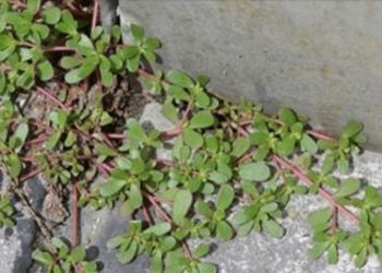pianta-giardino