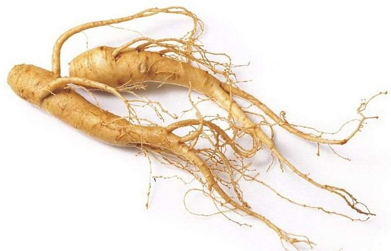 ginseng-rosso