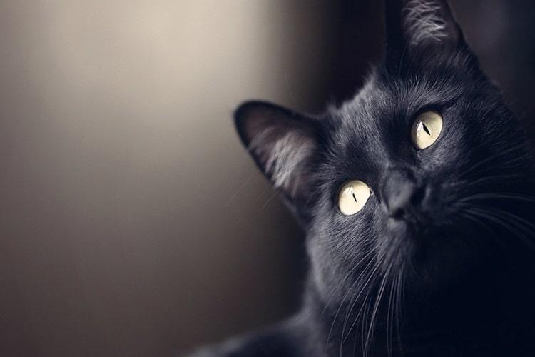 i-gatti-ci-guariscono