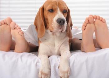 Via libera, dormite con il vostro cane ma non nello stesso letto