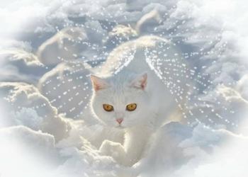 Dove Vanno i Gatti Quando Muoiono? Potrebbero Tornare da noi!