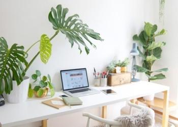 Ecco la pianta del guadagno, mettetela subito dentro casa e la vostra vita potrebbe cambiare in pochi istanti