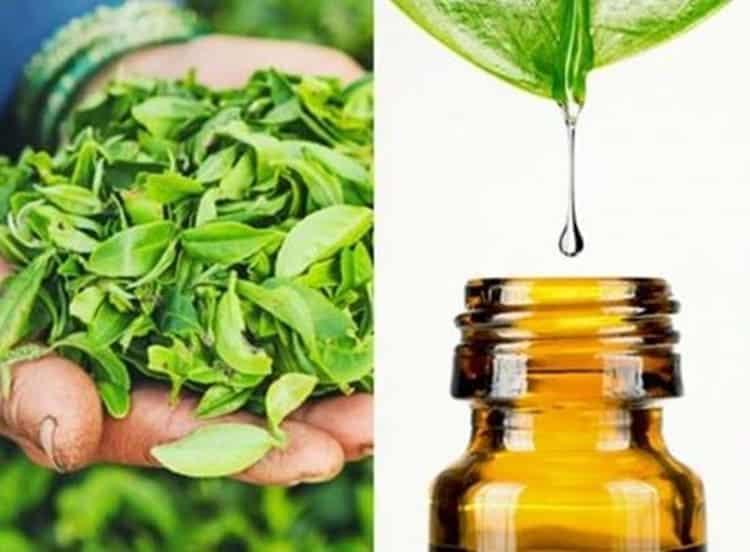 tea-tree-olio