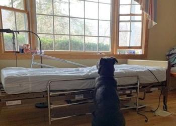 Labrador per giorni attende il padrone morto
