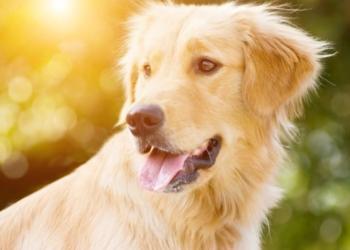 Cane orfano salvato da una morte certa da una canzone dei Lost