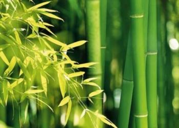 Pianta di bambù: proprietà e benefici per il corpo e per il volto