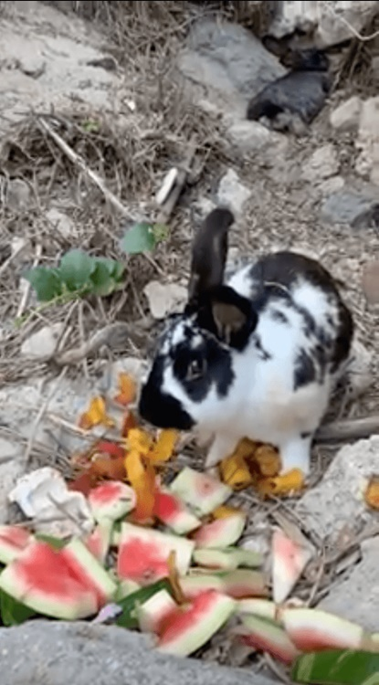 Coniglio in spiaggia ucciso a sassate a Ischia