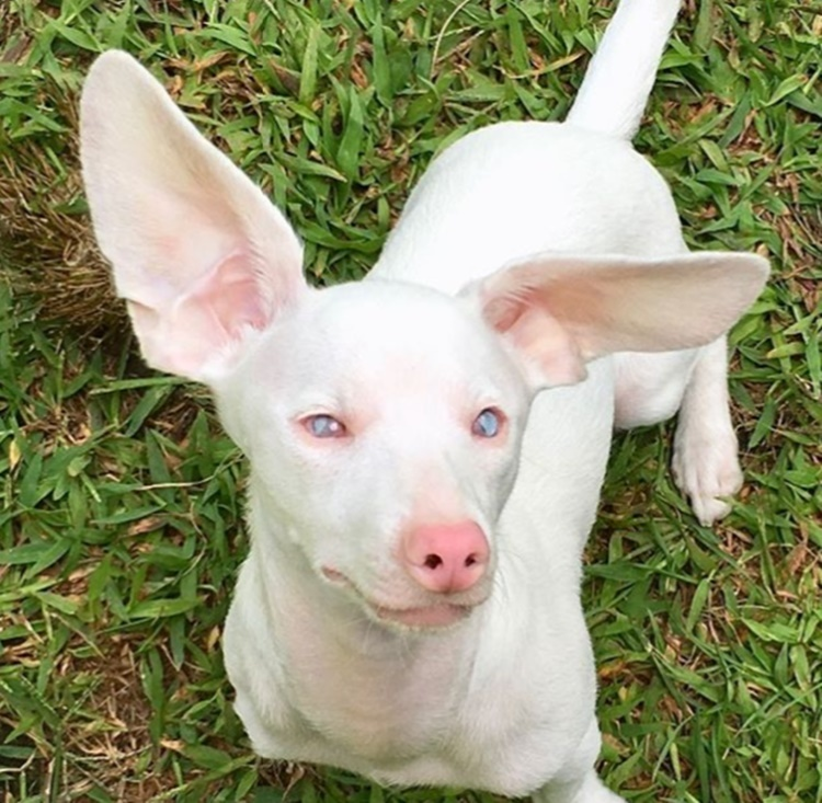 Abbandonato cane rosa nato cieco e sordo, lo salvano e aiuta il prossimo