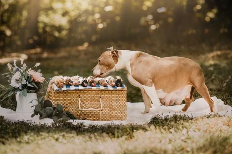 Cane abbandonato trova qualcuno che la salva e le fa ritrovare l'amore