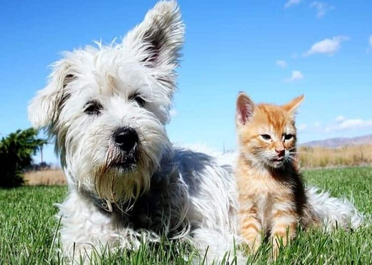 cani-e-gatti-in-estate