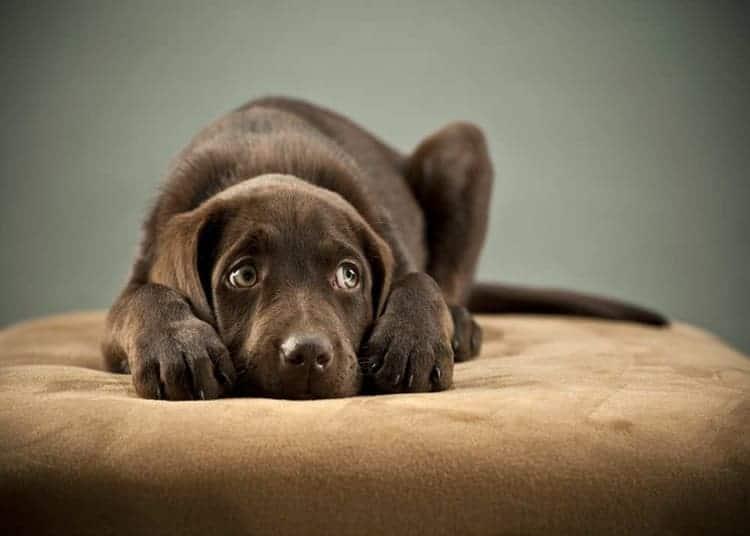 i-cani-ci-parlano-con-occhi-scoperta