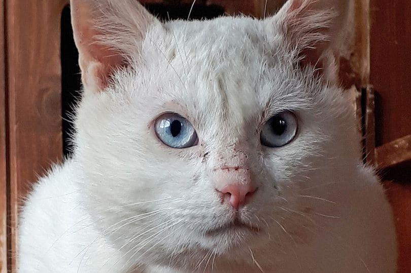 prendersi-cura-di-un-gatto-che-non-sente