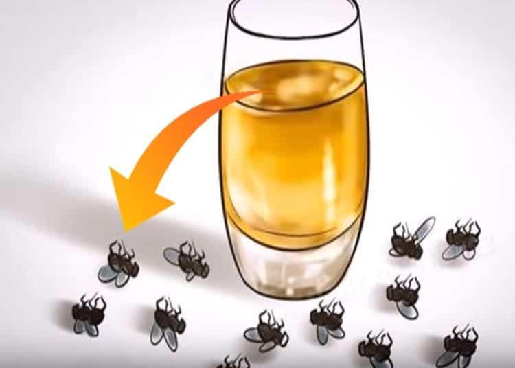 insetti-mosche-zanzare