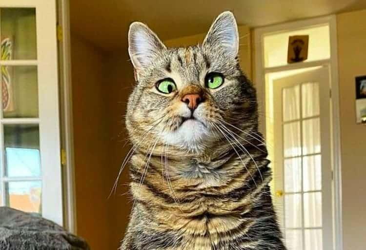gattino-con-gli-occhi-storti