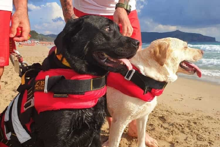 Tre cani bagnini